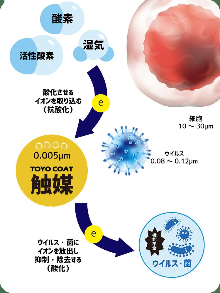 抗ウイルス・抗菌のしくみ
